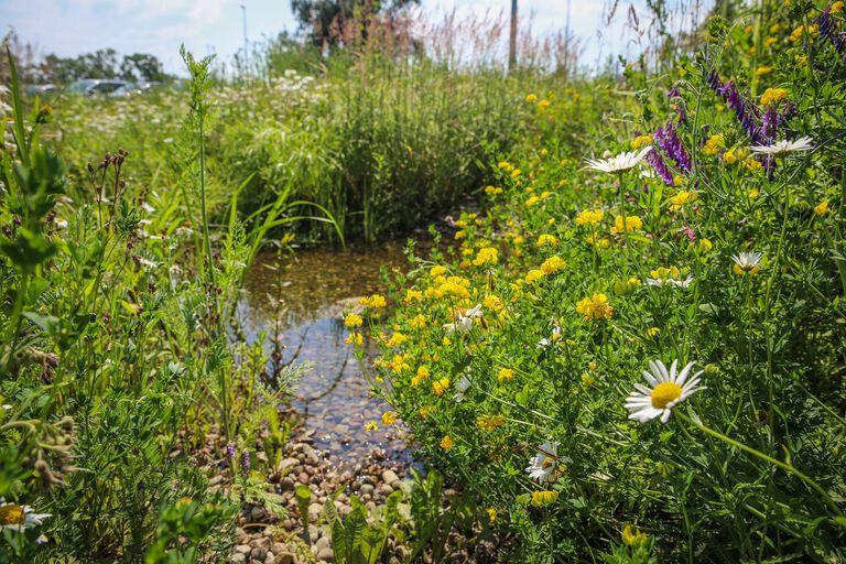Ogród deszczowy na terenie Miejskiego Magazynu Przeciwpowodziowego - ul. Kaczeńce