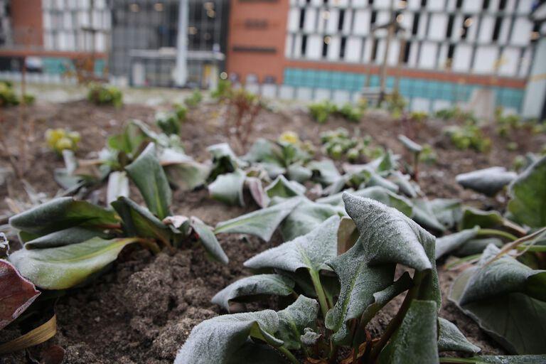 Ogród deszczowy przy ul. 3 maja