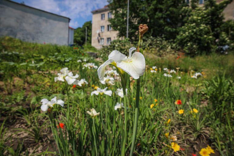 Ogród deszczowy przy ul. przy ul.  Zakopiańskiej
