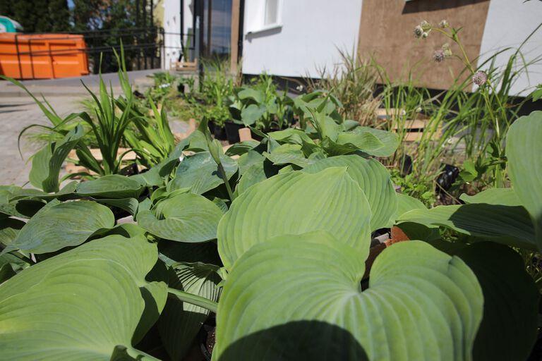 Ogród deszczowy przy ul. Ugory